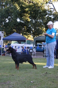 37. Best Australian Bred In Show Catalogue No 69 LEISTUNGHUN